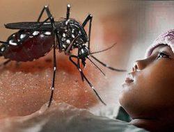 Ketahui gejala demam berdarah dengue (DBD) pada anak